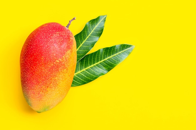 Tropical fruit, mango  on  yellow background. top view