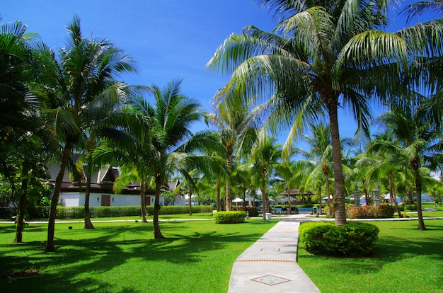 Tropical garden with palm trees