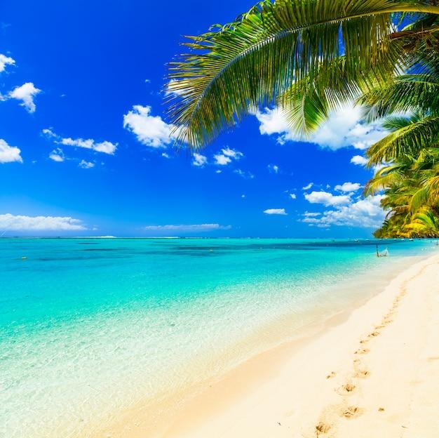 열대 휴양지, 청록색 바다가있는 완벽한 해변