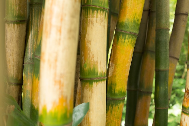 熱帯の緑の竹林