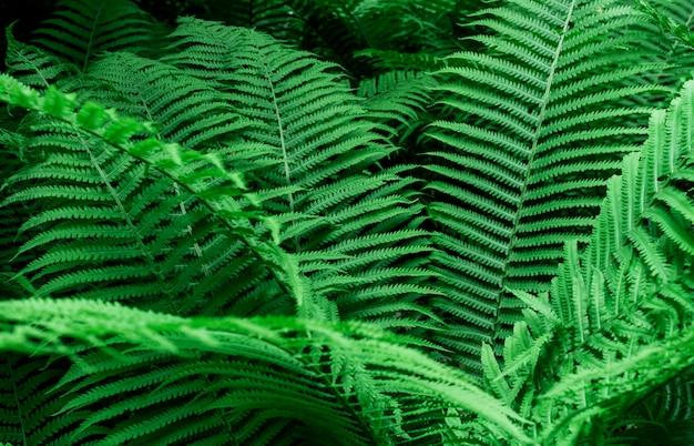 열 대 녹색 고비 잎
