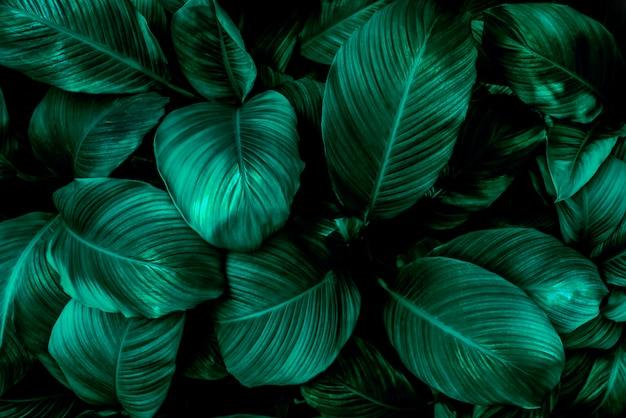 Лист тропической зеленой листвы на темном фоне в естественном тропическом лесу