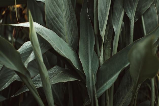 Тропические зеленые свежие листья растения после дождя в дикой природе. естественный и органический фон