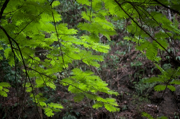 Tropical green jungle leaves