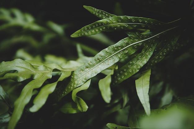 Тропическая зеленая предпосылка лист, темная тема тона.