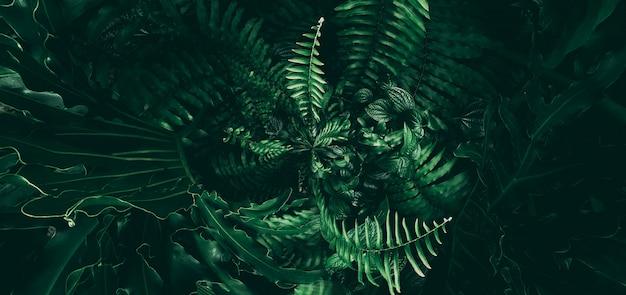 Tropical green leaf in dark tone.