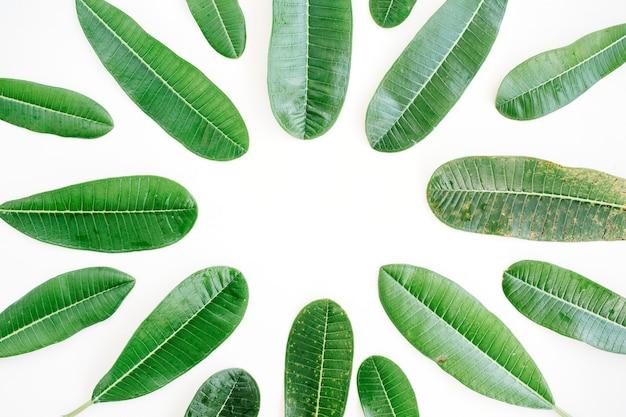 흰색 바탕에 열 대 녹색 잎 프레임입니다.