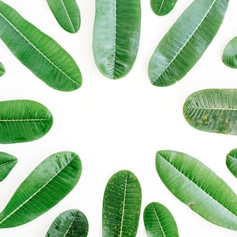 Tropical green leaf frame on white background. flat lay, top view