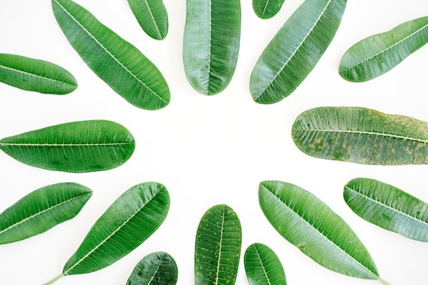 Tropical green leaf frame on white background.