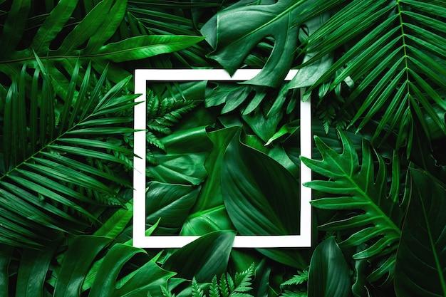 白いフレームと熱帯緑の葉の自然の背景