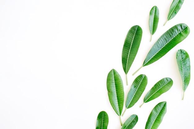 흰색 바탕에 열 대 녹색 잎입니다.