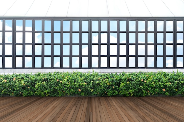 Tropical green leaf wall and window frame with clipping path.