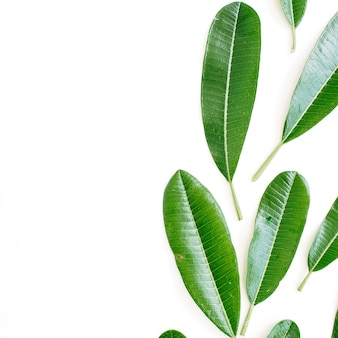 Tropical green leaf on white background. flat lay, top view