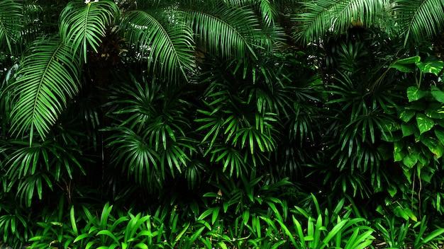 Tropical green leaf
