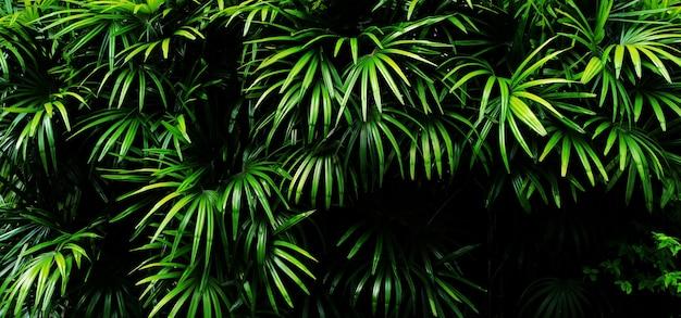 トロピカルグリーンの葉。