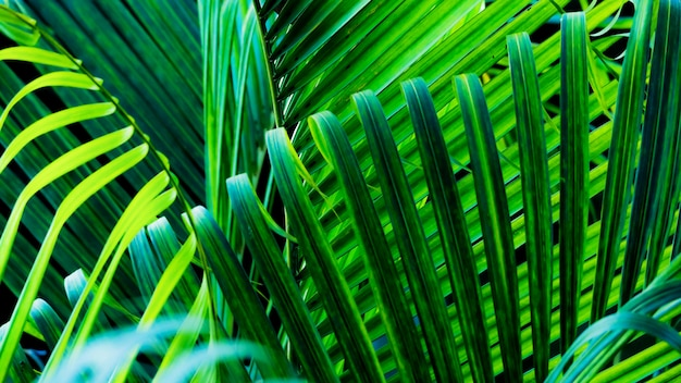 Tropical green leaves are a refreshing background from nature.