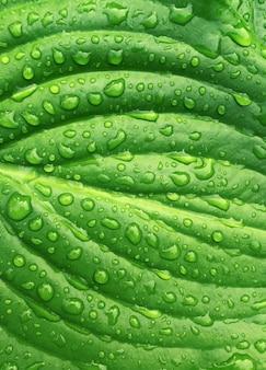 열 대 녹색 잎 배경 자연 여름 비 드롭 숲 식물