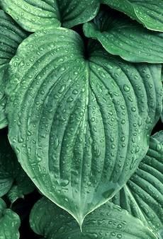 熱帯の緑の葉の背景自然夏の雨の低下の森の植物