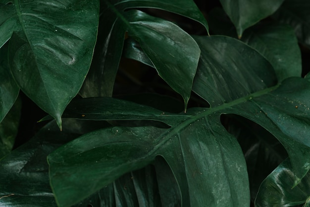 Tropical green leaves background