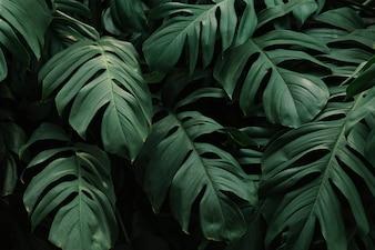 Тропические зеленые листья фон