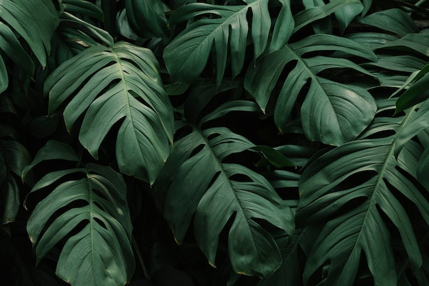 Green Leaf Background Photos 94 000 High Quality Free Stock Photos 🌱 then you're in the right place. green leaf background photos 94 000