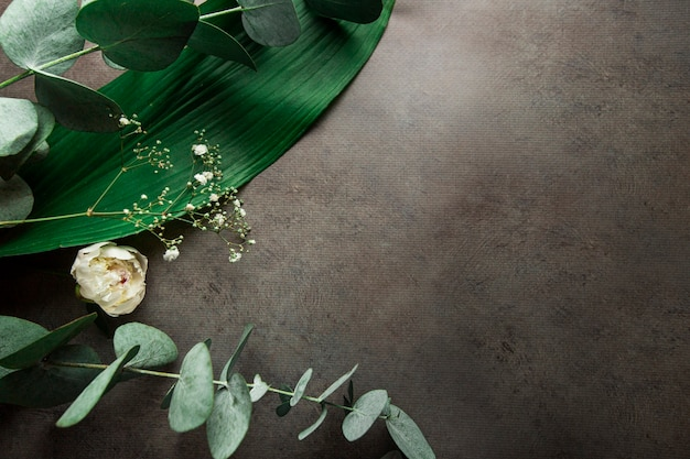Tropical green leaves and branches of eucalyptus on a dark gray background with copy space abstract plant nature pattern background