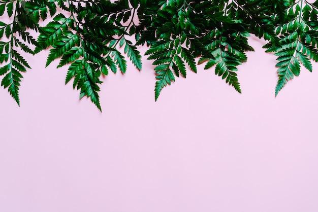 색상 배경에 열 대 녹색 잎