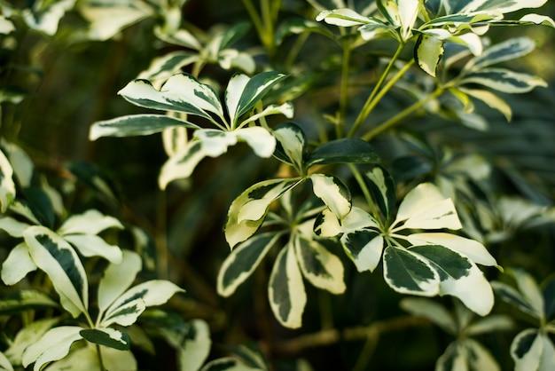 어두운 배경에 열 대 녹색 잎.