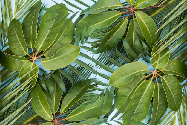 Tropical green leaves palm background