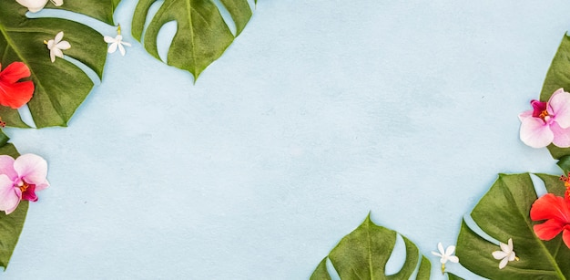 Tropical green leaves. summer background