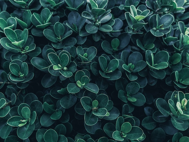 Tropical green leaves texture background