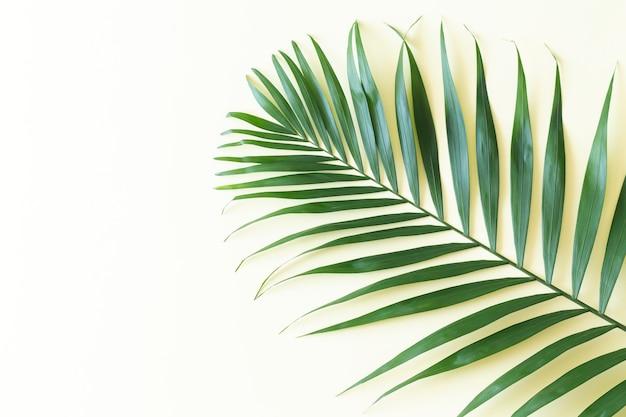Вид сверху ветки тропических зеленых пальмовых листьев на светло-желтом фоне