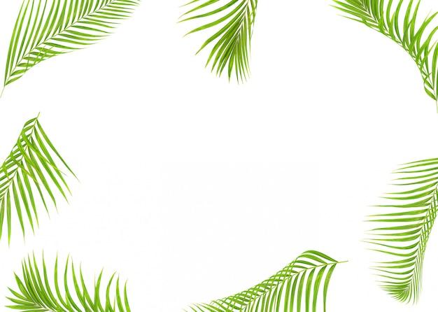 여름 흰색 절연 열 대 녹색 야 자 잎