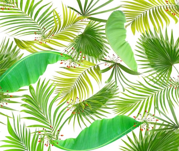열 대 녹색 야자수 잎 나무와 꽃 배경