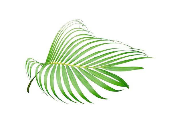 흰색 배경에 고립 된 열 대 녹색 야자수 잎
