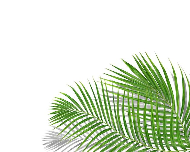 검은 그림자 배경으로 열 대 녹색 야자수 잎