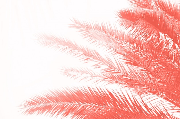 Tropical green palm leaves and branches on coral color. sunny day, summer concept. sun over palm trees. travel, holiday background.
