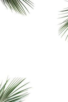 Тропические зеленые пальмовые листья на белом