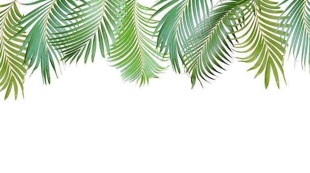열 대 녹색 야자수 여름 배너에 대 한 흰색 배경에 고립 된 나무 잎