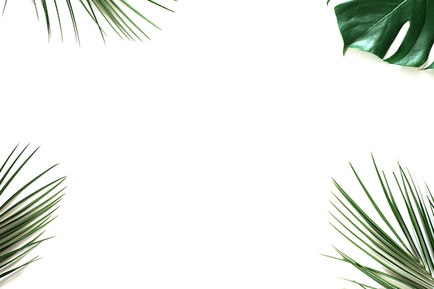 Tropical green palm leaves on white
