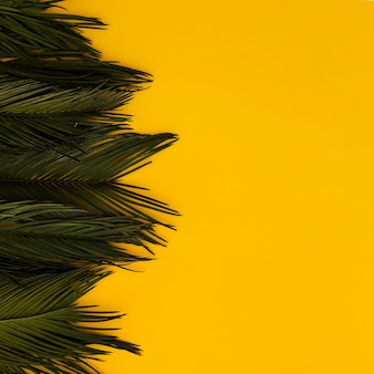 Tropical green palm leaves on yellow copy space background.