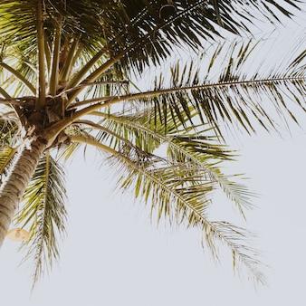 Тропическая зеленая пальма на красивом пляже с синим морем