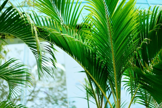 Tropical green palm trees background. summer, holiday and travel concept with copy space.