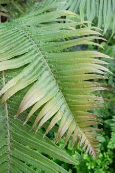 이 슬 방울과 열 대 녹색 식물 큰 휴가를 닫습니다.