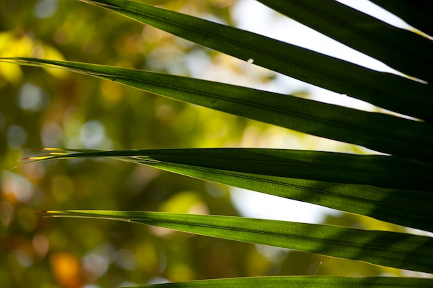 Tropical green pointed palm fronds