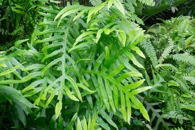야외 정원의 열대 녹색 환경 프리미엄 사진