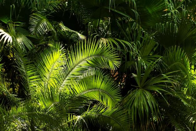 熱帯の緑と植物