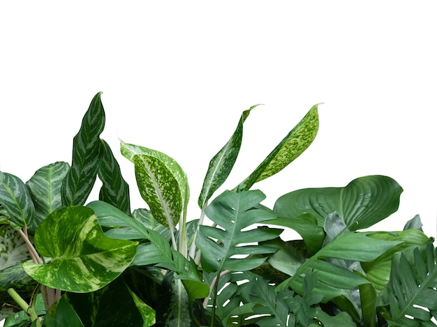 Tropical greenery leaves foliage plant arrangement with philodendron