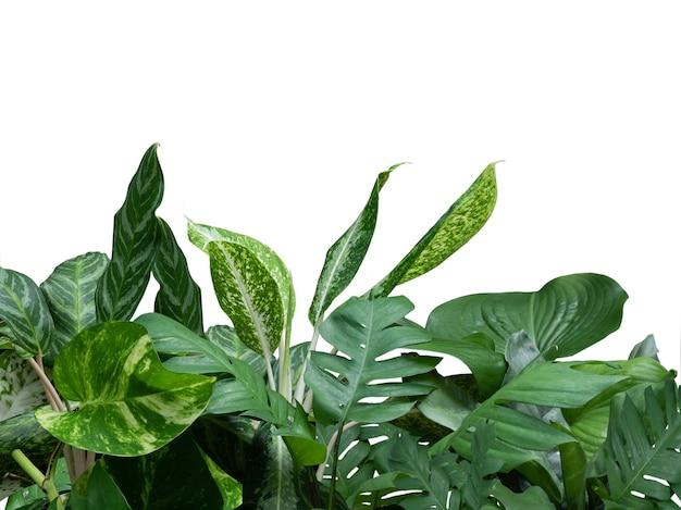 Тропическая зелень, листья, листва, растения с филодендроном