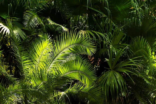 Tropical greenery and plants